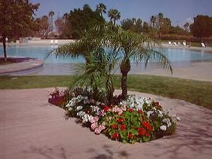 pool4.jpg (67456 bytes)